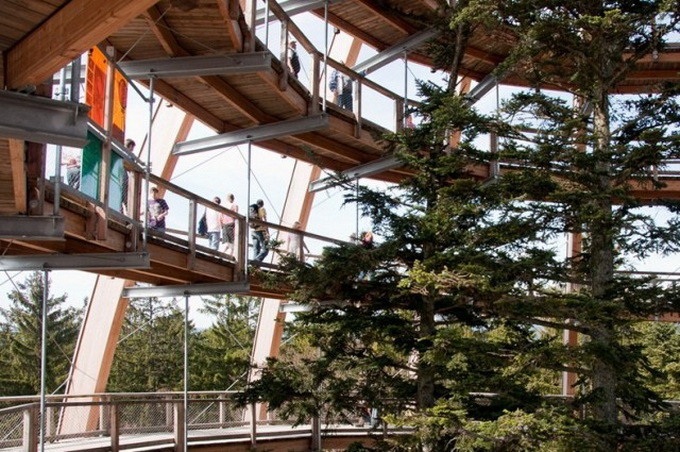 The-Worlds-Longest-Tree-Top-Walk8-640_4.jpg