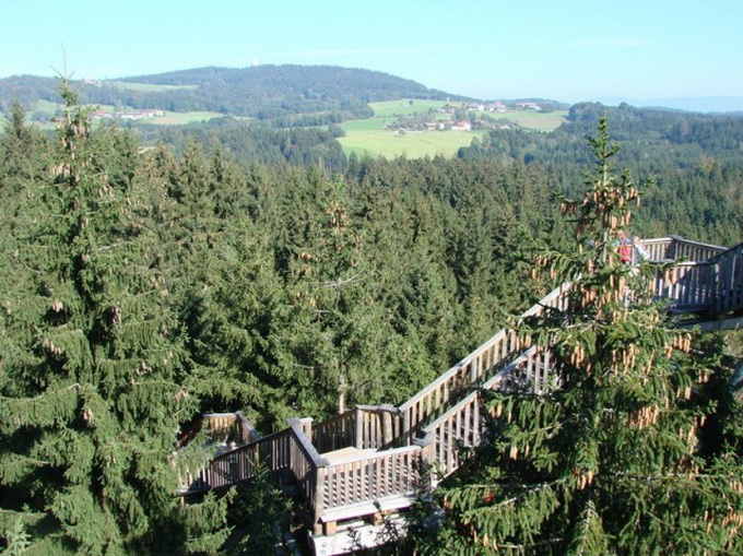 The-Worlds-Longest-Tree-Top-Walk8-640_6.jpg
