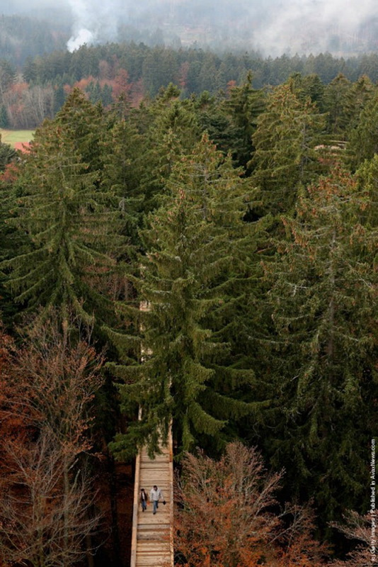 The-Worlds-Longest-Tree-Top-Walk8-640_7.jpg