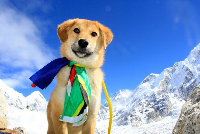 dogmounteverest10.jpg