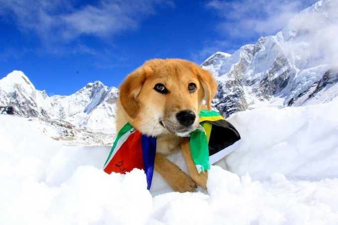 dogmounteverest2.jpg