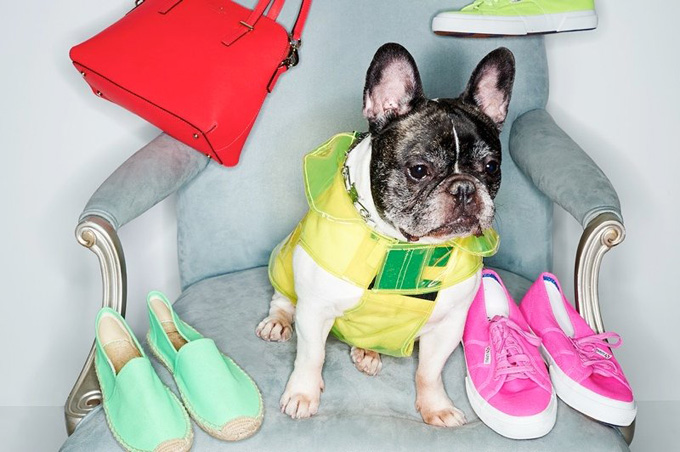 800x532xshopbop-dogs-spring-accessories1.jpg.pagespeed.ic.ZSOt52hIhu.jpg