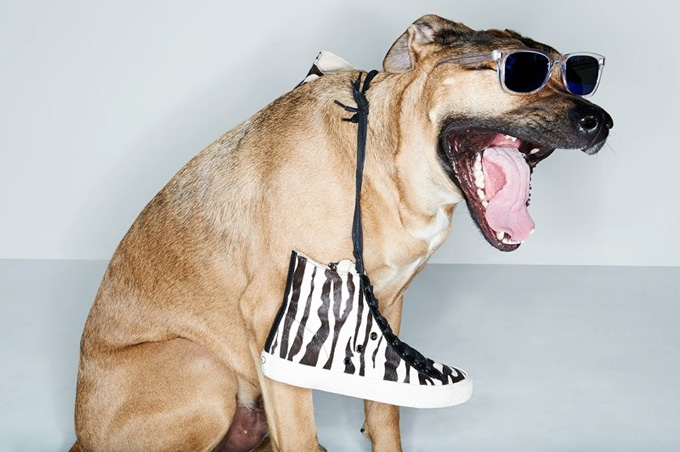 800x532xshopbop-dogs-spring-accessories3.jpg.pagespeed.ic.BeHbQiM0sB.jpg