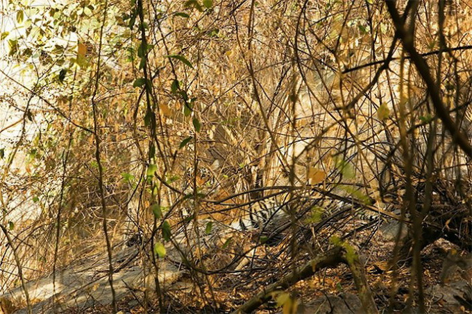 Animals-in-Hiding1-640x430.jpg
