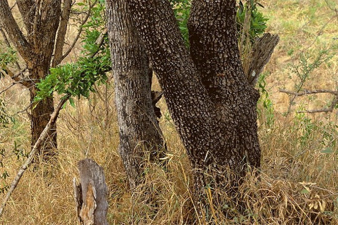 Animals-in-Hiding1-640x436.jpg