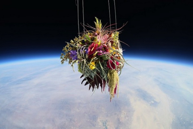 Plants-in-Stratosphere2.jpg