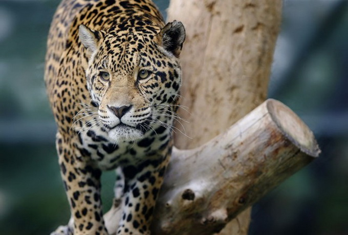 Zoo-Animals-Photography1-640x_14.jpg