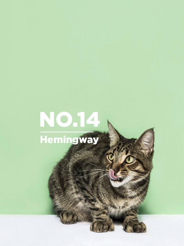 Ernest-Hemingway-cats-photo-henry-Hargreaves-2-600_12.jpg